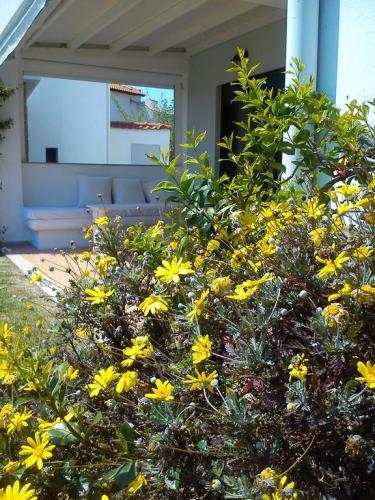 Villa Anastasia Skioni garden 3